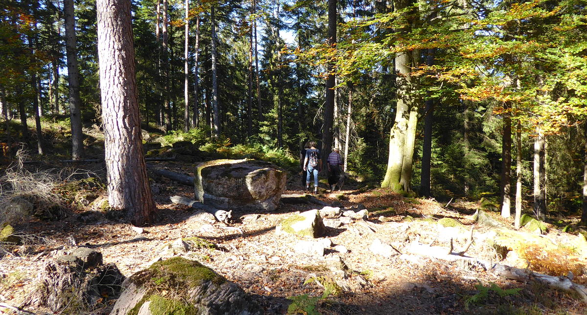 On the blueberry trail of Enzklösterle
