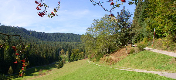 View of the Hirschtal nearby Enzklösterle