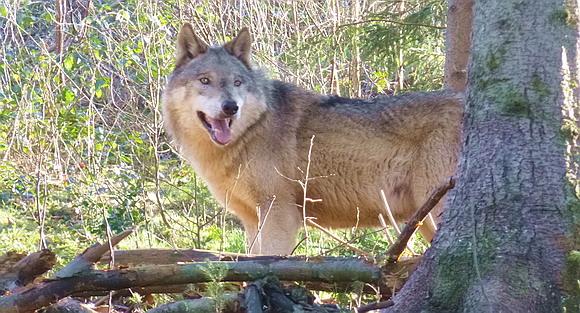 Wolfspark Schwarzwald